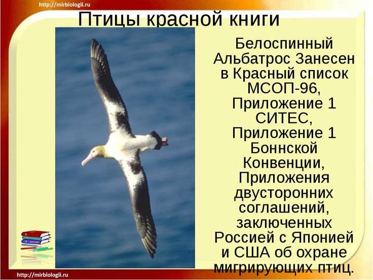 Птицы красной книги Белоспинный Альбатрос Занесен в Красный список МСОП-96, П...
