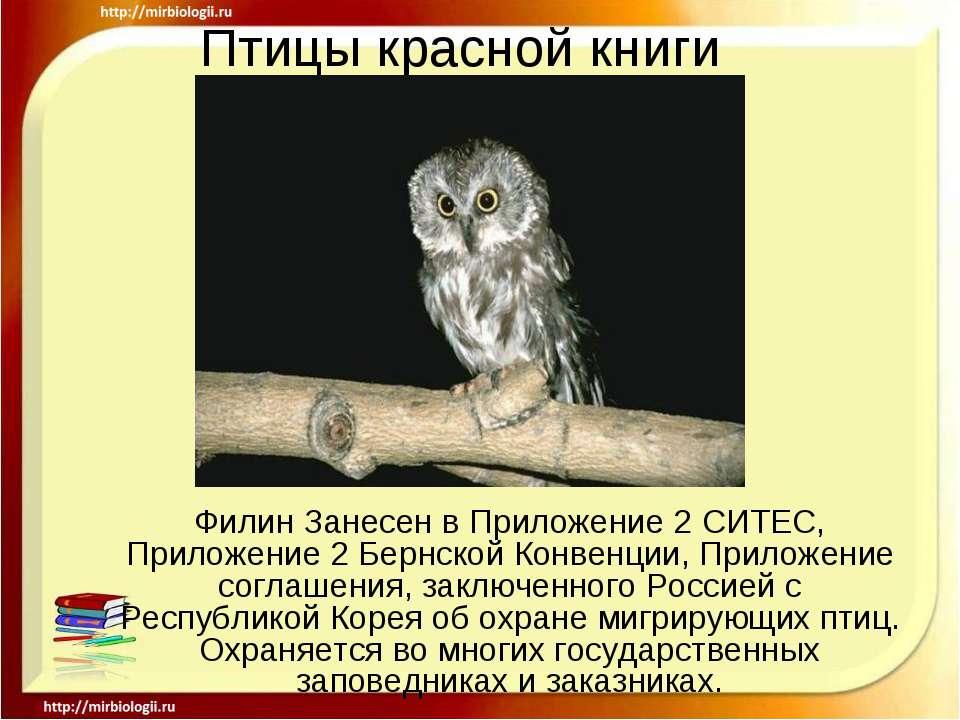 Птицы красной книги Филин Занесен в Приложение 2 СИТЕС, Приложение 2 Бернской...