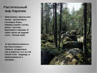 Растительный мир Карелии Жемчужины карельских лесов – реликтовые сосновые бор...