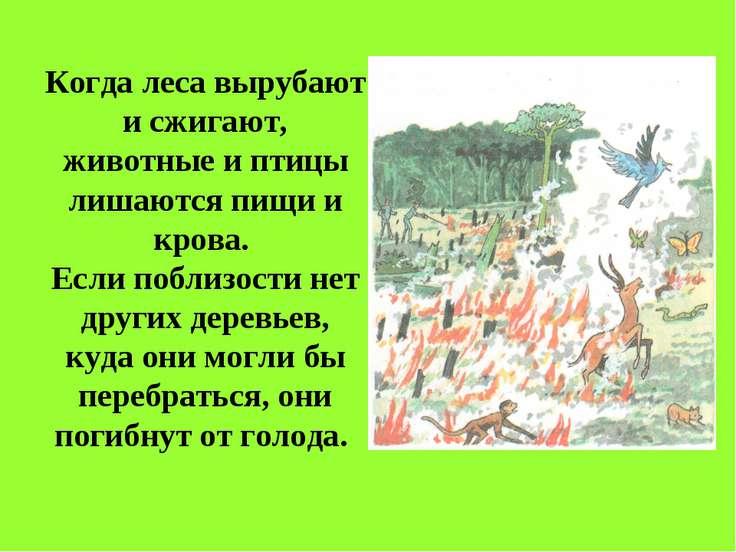 Когда леса вырубают и сжигают, животные и птицы лишаются пищи и крова. Если п...