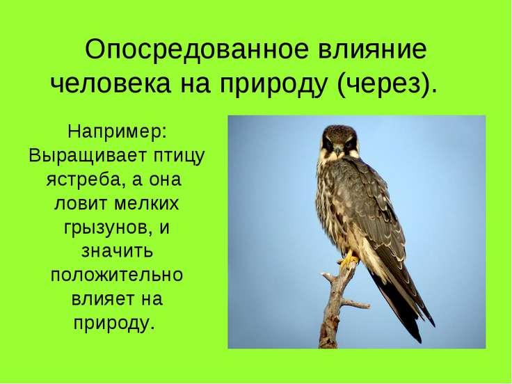 Опосредованное влияние человека на природу (через). Например: Выращивает птиц...