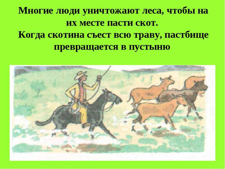 Многие люди уничтожают леса, чтобы на их месте пасти скот. Когда скотина съес...