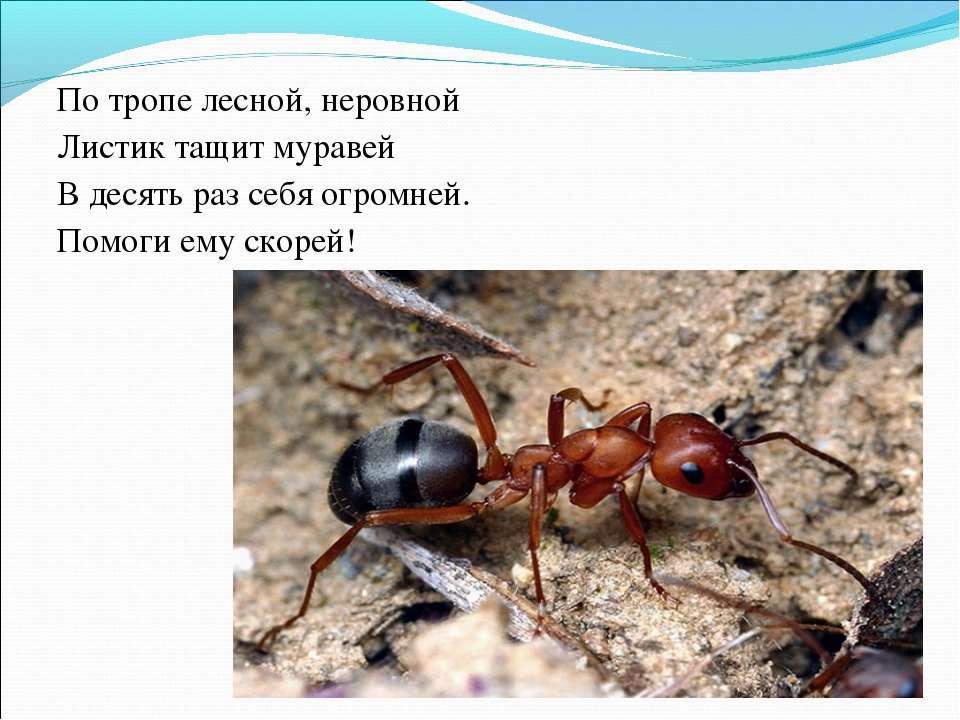 По тропе лесной, неровной Листик тащит муравей В десять раз себя огромней. По...