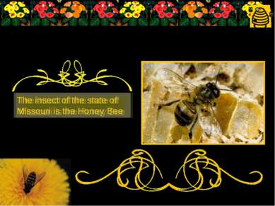 The insect of the state of Missouri is the Honey Bee