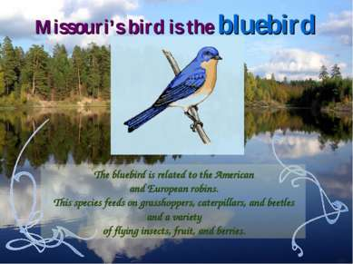 The bluebird is related to the American and European robins. This species fee...
