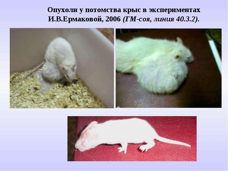 Опухоли у потомства крыс в экспериментах И.В.Ермаковой, 2006 (ГМ-соя, линия 4...