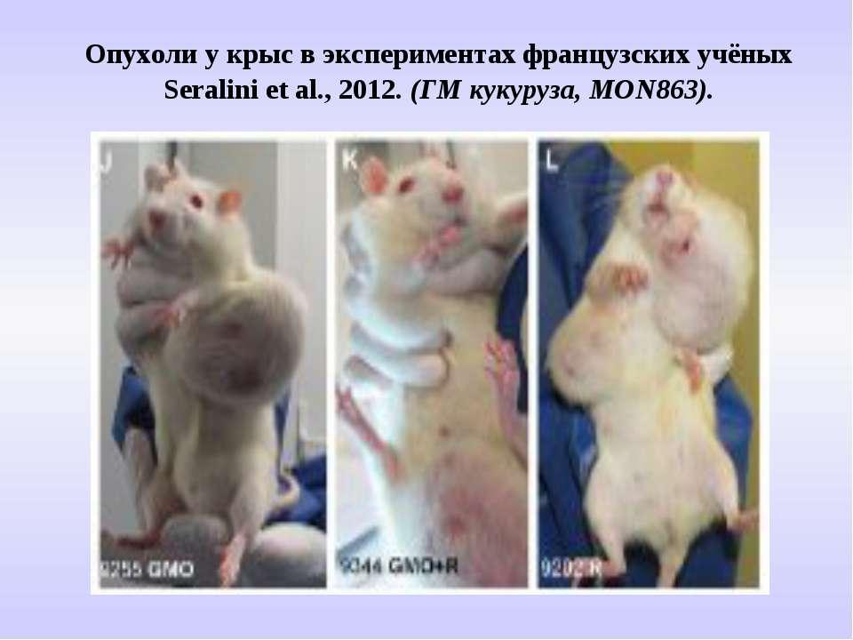 Опухоли у крыс в экспериментах французских учёных Seralini et al., 2012. (ГМ ...