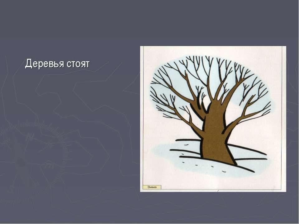 Деревья стоят