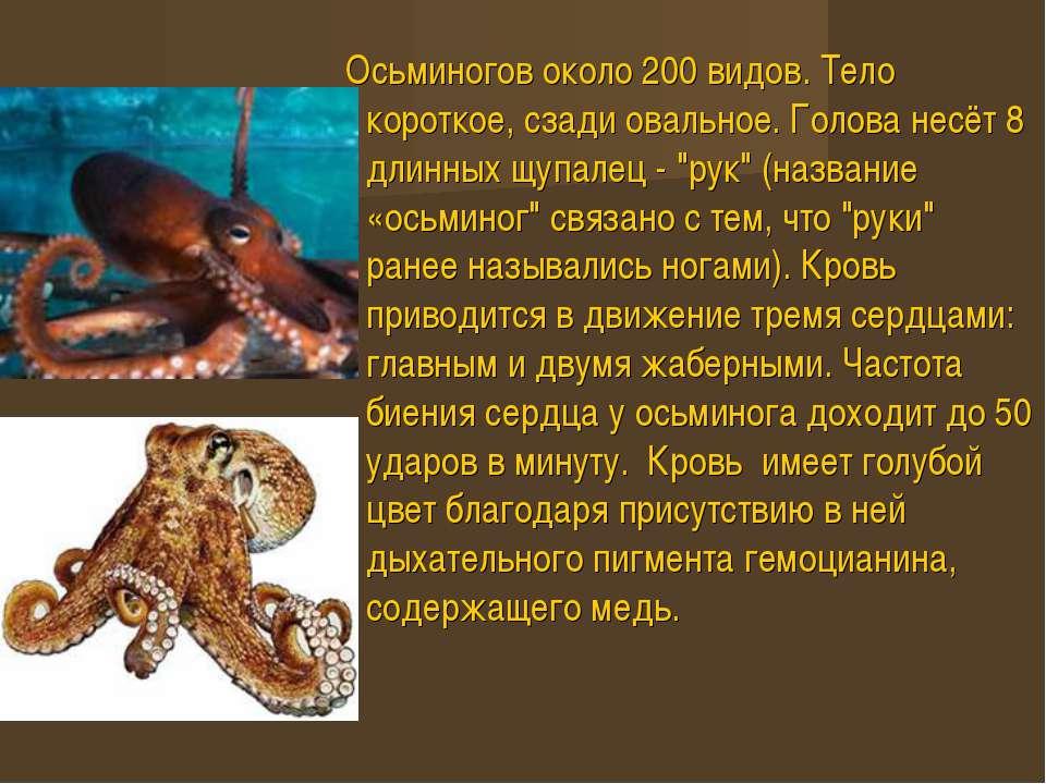 Осьминогов около 200 видов. Тело короткое, сзади овальное. Голова несёт 8 дли...