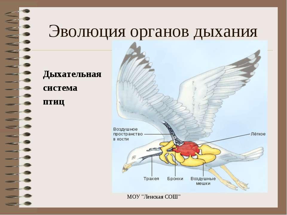 "Дыхательная система птиц МОУ """