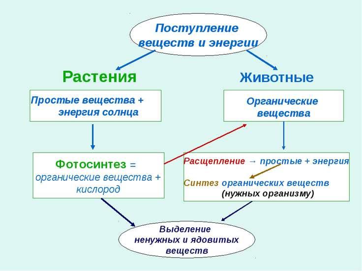 Растения Животные Поступление веществ и энергии Простые вещества + энергия со...
