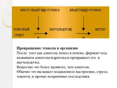 Превращение этанола в организме После того как алкоголь попал в печень, ферме...