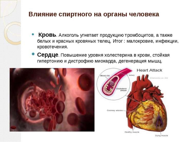 Влияние спиртного на органы человека Кровь. Алкоголь угнетает продукцию тромб...