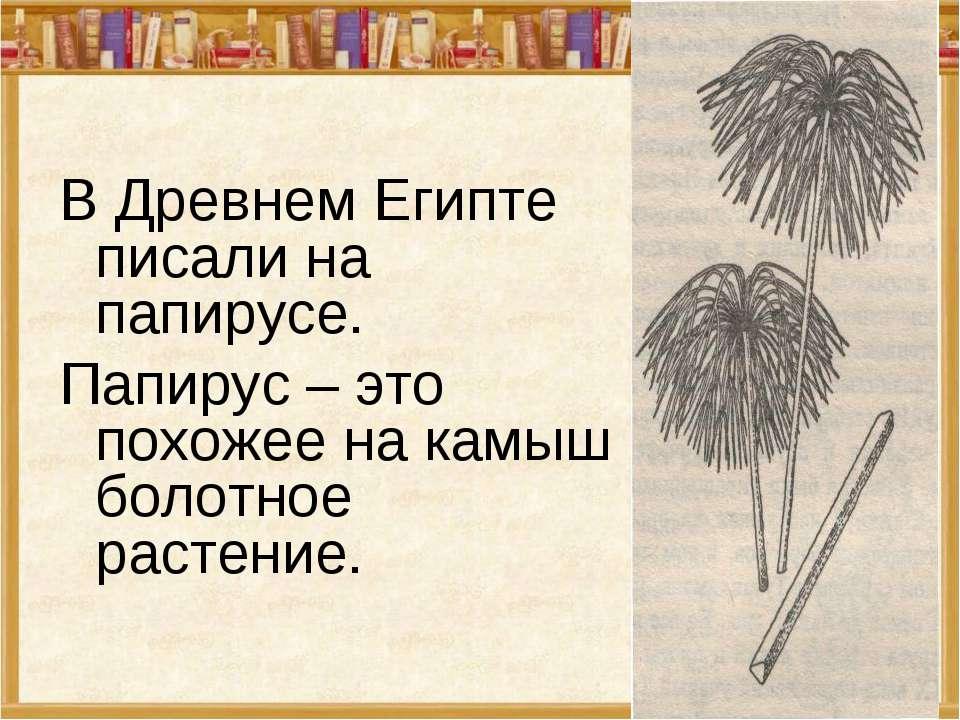 В Древнем Египте писали на папирусе. Папирус – это похожее на камыш болотное ...