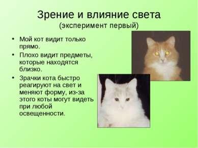 Зрение и влияние света (эксперимент первый) Мой кот видит только прямо. Плохо...