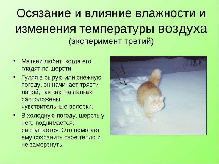 Осязание и влияние влажности и изменения температуры воздуха (эксперимент тре...
