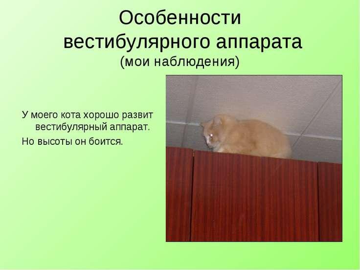 Особенности вестибулярного аппарата (мои наблюдения) У моего кота хорошо разв...