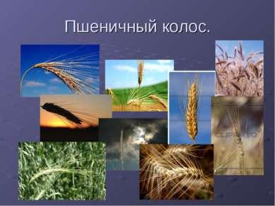 Пшеничный колос.