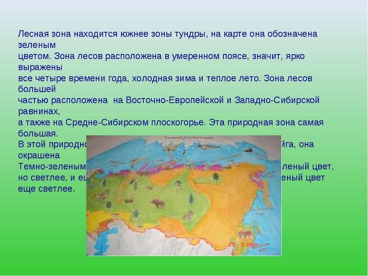 Лесная зона находится южнее зоны тундры, на карте она обозначена зеленым цвет...