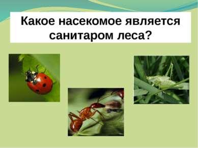 Какое насекомое является санитаром леса?