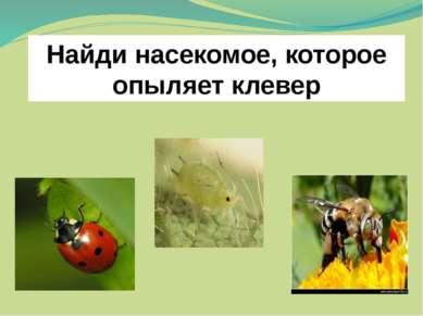 Найди насекомое, которое опыляет клевер