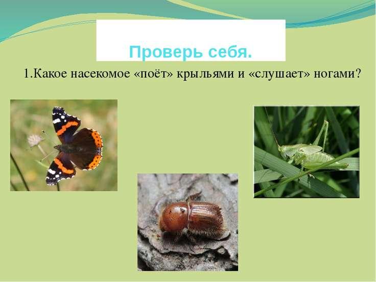 1.Какое насекомое «поёт» крыльями и «слушает» ногами? Проверь себя.