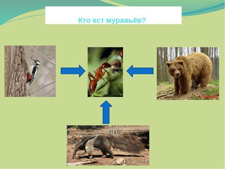 Кто ест муравьёв?