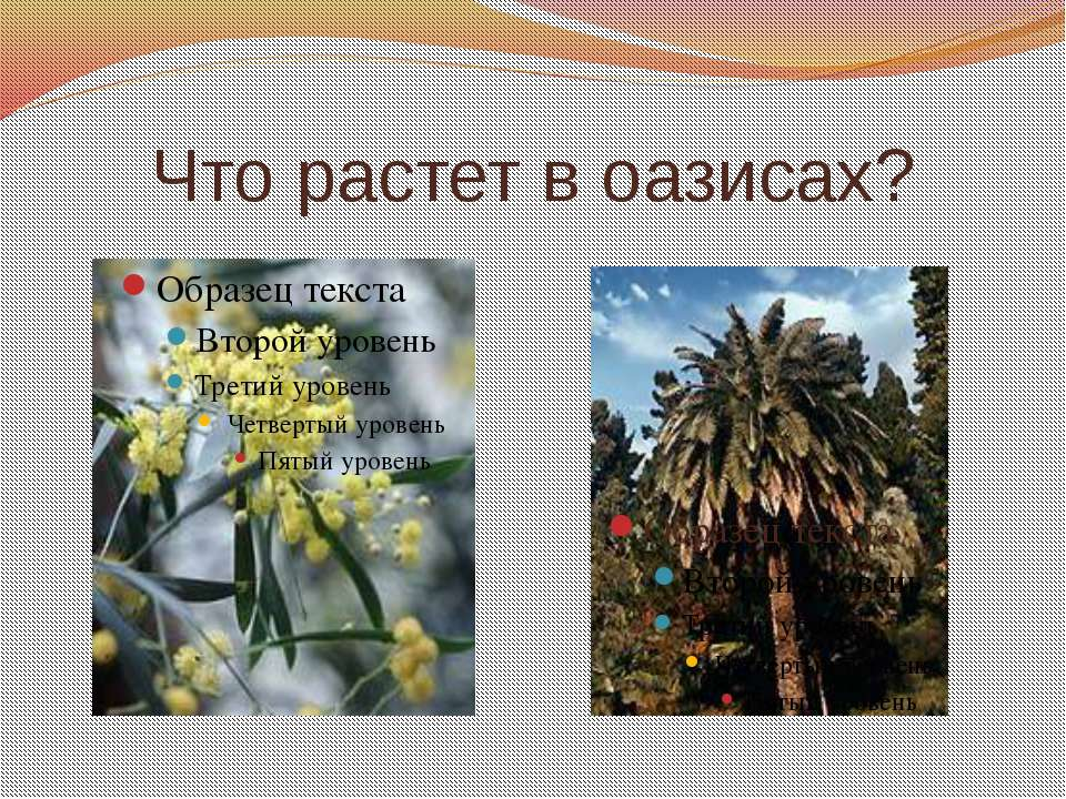 Что растет в оазисах?