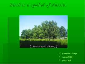 Birch is a symbol of Russia