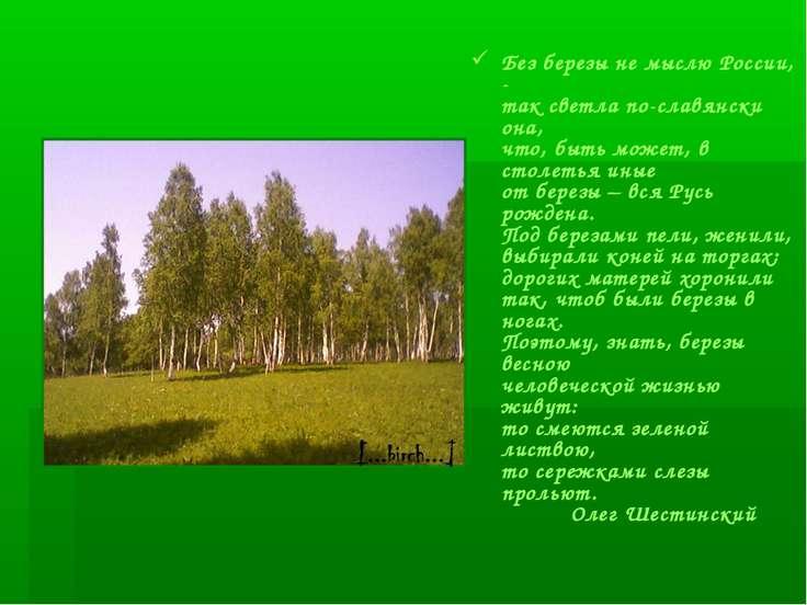 Без березы не мыслю России, - так светла по-славянски она, что, быть может, в...