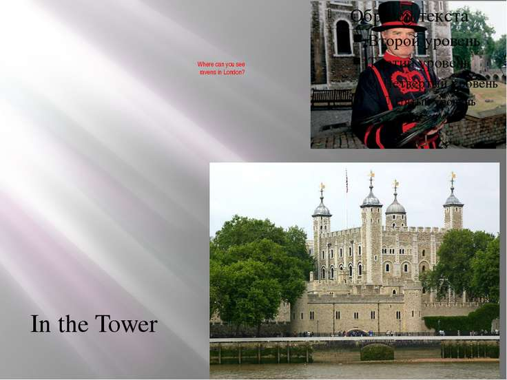 Where can you see ravens in London? In the Tower
