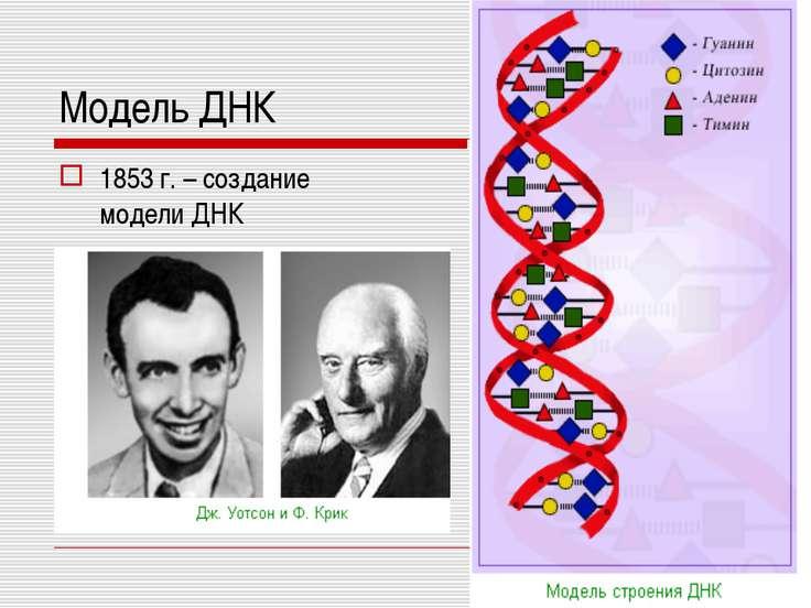 Модель ДНК 1853 г. – создание модели ДНК