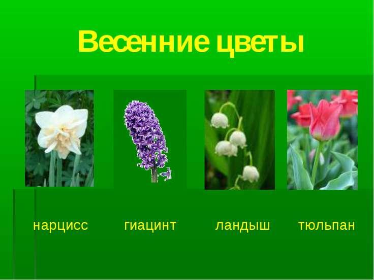 Весенние цветы нарцисс гиацинт ландыш тюльпан