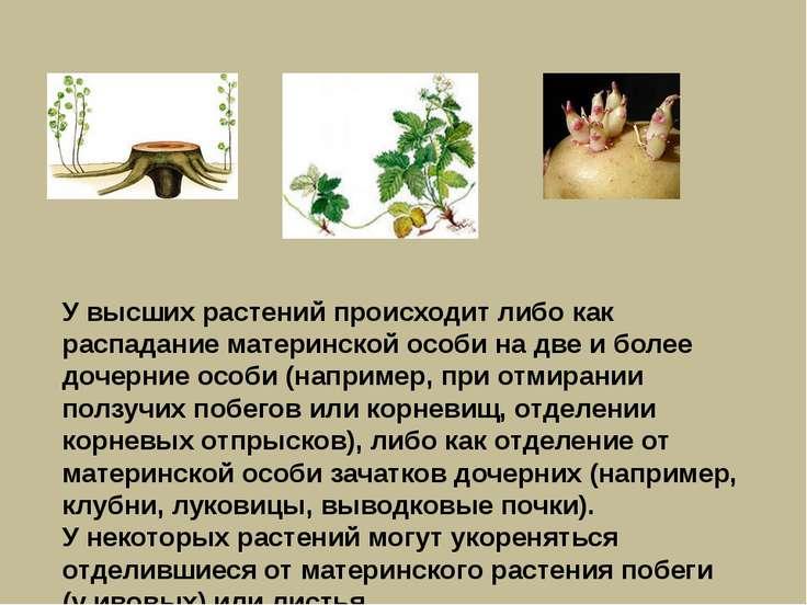 У высших растений происходит либо как распадание материнской особи на две и б...