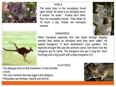 KOALA The koala lives in the eucalyptus forest (gum forest). Its name is an a...