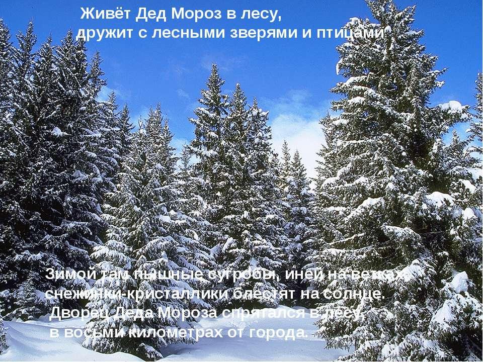 Живёт Дед Мороз в лесу, дружит с лесными зверями и птицами Зимой там пышные с...