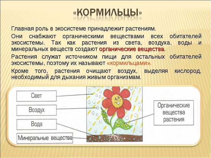 Главная роль в экосистеме принадлежит растениям. Они снабжают органическими в...