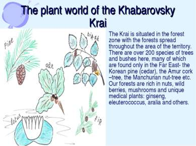 The plant world of the Khabarovsky Krai The Krai is situated in the forest zo...