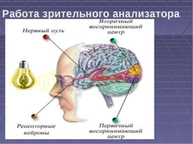 Работа зрительного анализатора