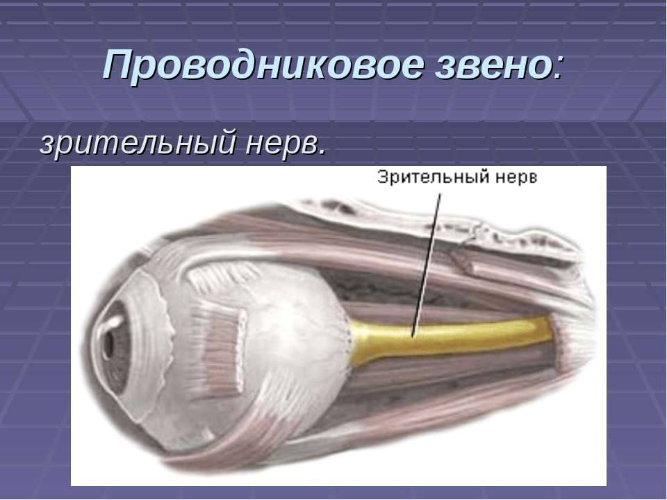Проводниковое звено: зрительный нерв.