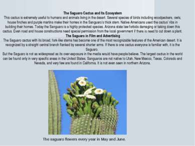 The Saguaro Cactus and Its Ecosystem This cactus is extremely useful to human...