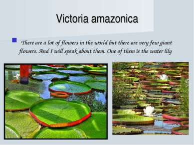 Victoria amazonica There are a lot of flowers in the world but there are very...