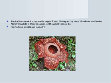 The Rafflesia arnoldii is the world's largest flower. Photograph by Harry Wir...
