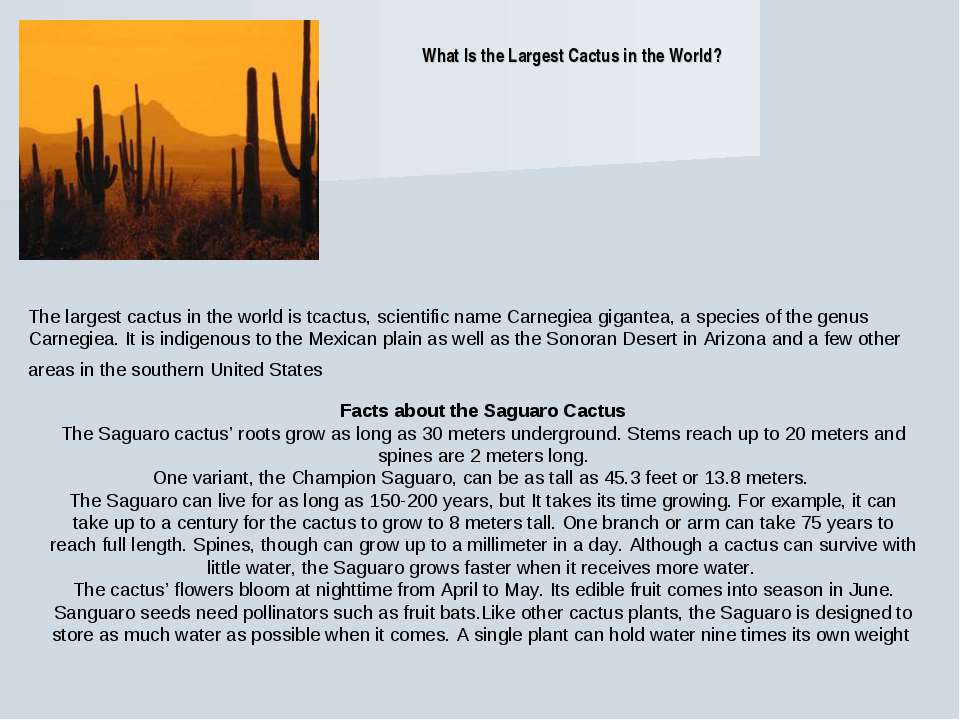 What Is the Largest Cactus in the World? The largest cactus in the world is t...