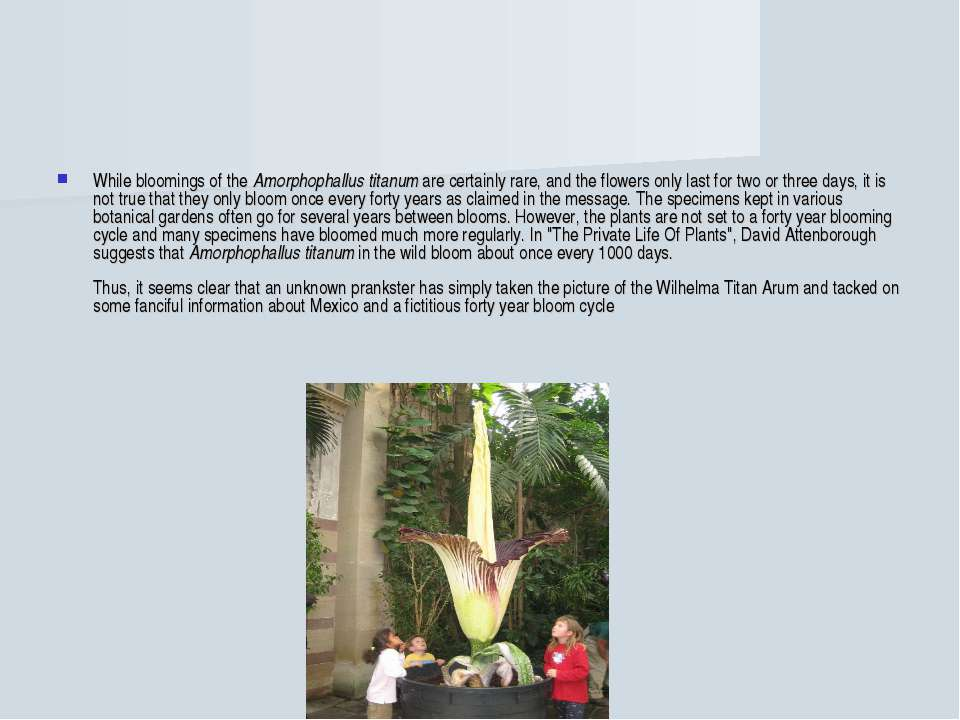 While bloomings of the Amorphophallus titanum are certainly rare, and the flo...