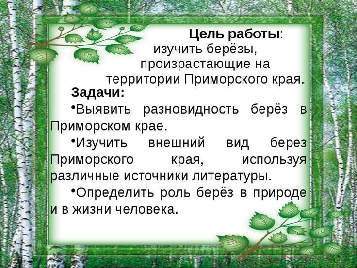 Цель работы: изучить берёзы, произрастающие на территории Приморского края. З...