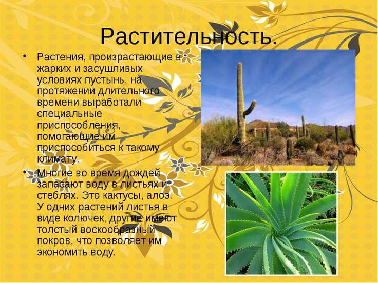 Растительность. Растения, произрастающие в жарких и засушливых условиях пусты...