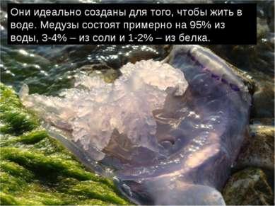 Они идеально созданы для того, чтобы жить в воде. Медузы состоят примерно на ...