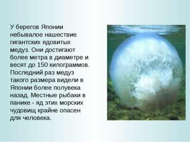 У берегов Японии небывалое нашествие гигантских ядовитых медуз. Они достигают...