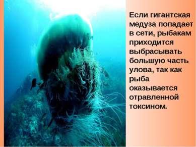 Если гигантская медуза попадает в сети, рыбакам приходится выбрасывать большу...